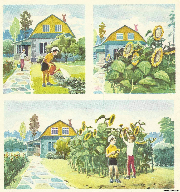 Картинки про лето для составления рассказа